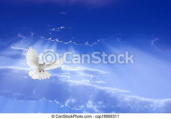 White dove flying in the sky - csp18866311
