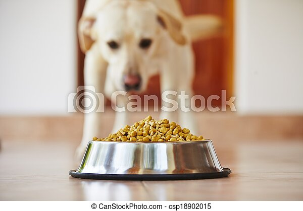 Hungry dog - csp18902015