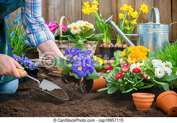 Gardener planting flowers - csp18957115