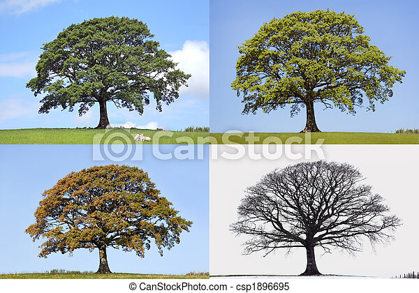 Oak Tree Four Seasons - csp1896695