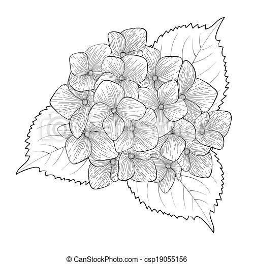 Dessin De Fleur D Hortensia Idee D Image De Fleur