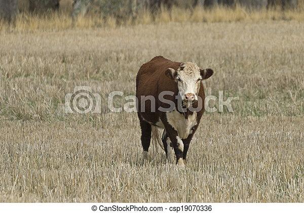 mammal - csp19070336