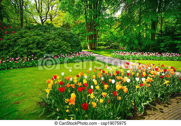 Garden in Keukenhof, tulip flowers and trees. Netherlands - csp19075975