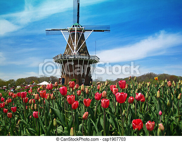 Dutch windmill in a field of blooming tulips - csp1907703