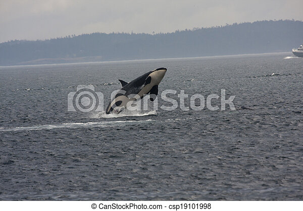 Orca Tour Anacortes