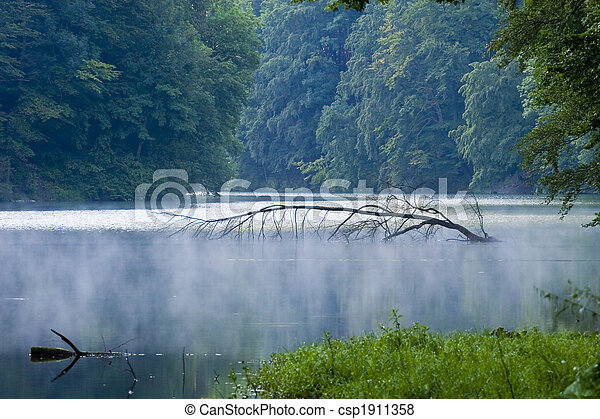 abstract, background, beautiful, beauty, botany, branches, bright, clean, day, environment, fog, foliage, forest, fresh, glow, grass, green, growth, hungary, impassable, lake, leaves, lush, magic, natural, nature, organic, outdoors, peace, plants, reflections, river, scenic, spring, summer, sunlight, sunny, tranquil, tree, tropical, water, waterfall, waves, wild, woods - csp1911358