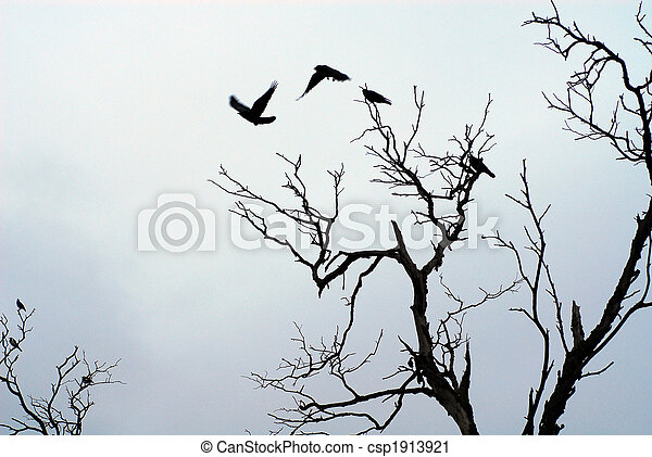 shadow of birds flying off - csp1913921