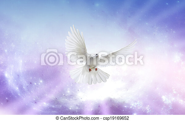 Holy Spirit Dove - csp19169652
