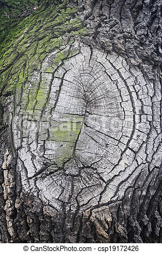 wood tree bark texture - csp19172426