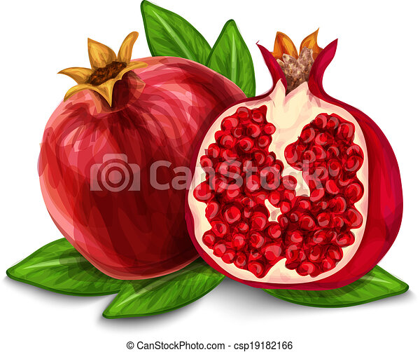 Clip Art Pomegranate Clipart pomegranate clipart vector graphics 3161 eps clip isolated poster or emblem natural organic