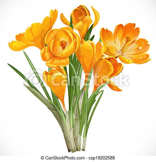 Krokusse, Fruehjahr, Rebe, Freigestellt, Gelber Hintergrund, Weißes Vektor