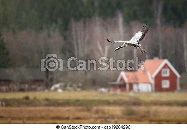 Crane bird in for landing