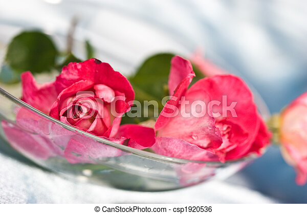 fragility roses - csp1920536