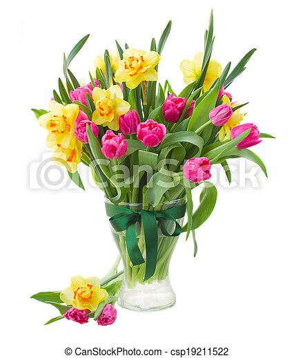 bouquet of pink tulips and yellow daffodils in vase isolated on white ...