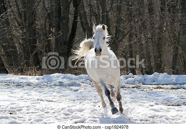 Skipping white horse - csp1924978