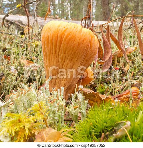 images de comestible truncate club corail champignons orange csp19257052 recherchez. Black Bedroom Furniture Sets. Home Design Ideas