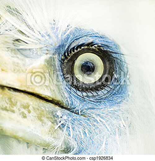 bird eye closeup - csp1926834