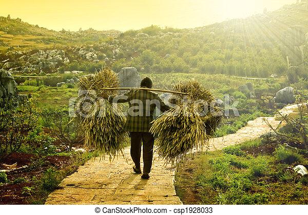 harvesting - csp1928033