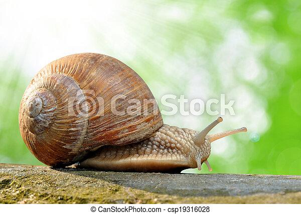 Stock fotos de jard n caracol helix aspersa for Caracol de jardin