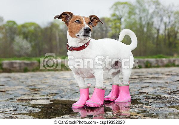 Photo , chien, pluie