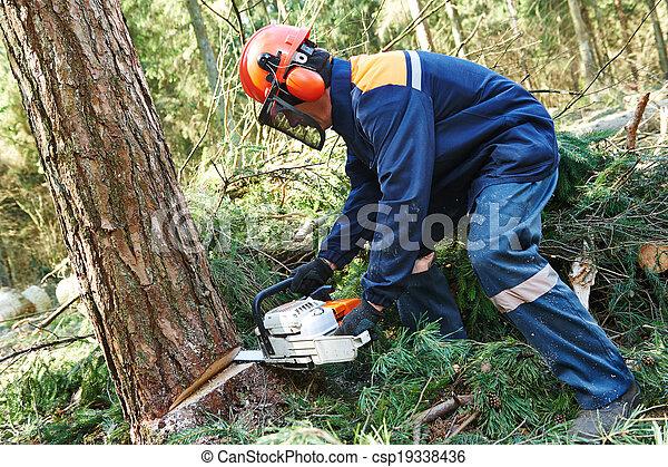 Lumberjack cutting tree in forest