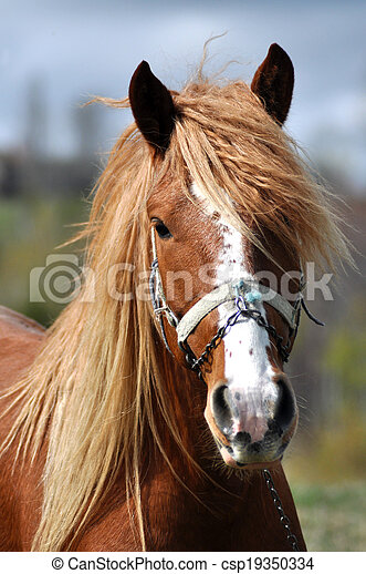 Portrait of a beautiful horse