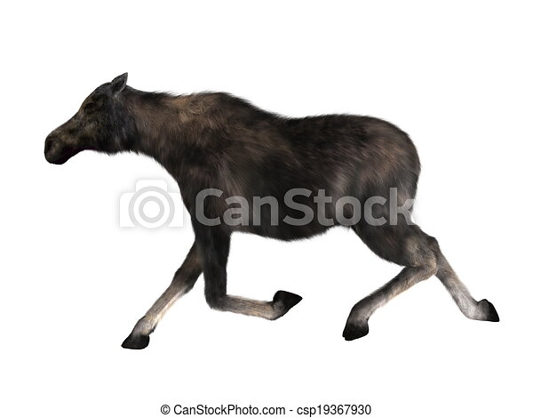 moose - csp19367930