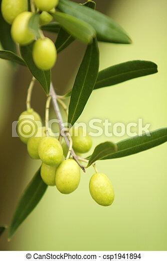 Olive Tree - csp1941894