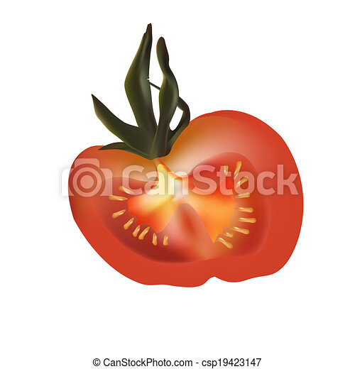 Cut Tomato Drawing Red Delicious Tomato in The