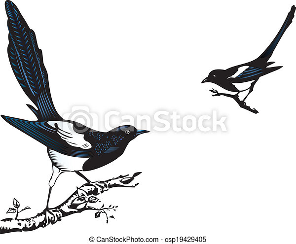 clipart vecteur de pies pie oiseaux perching sur a arbre csp19429405 recherchez des. Black Bedroom Furniture Sets. Home Design Ideas
