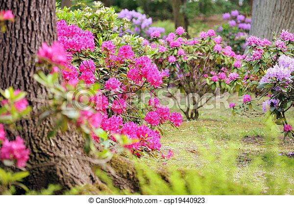 Stock de fotos exuberante ajardinado jard n arriate - Arriate plantas ...