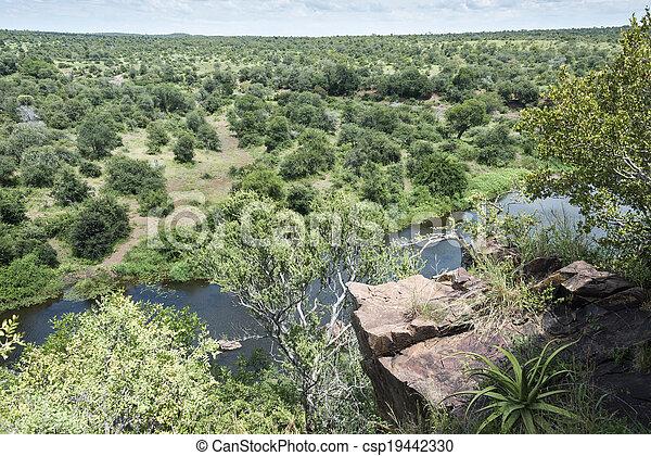 safari in kruger national park south africa - csp19442330