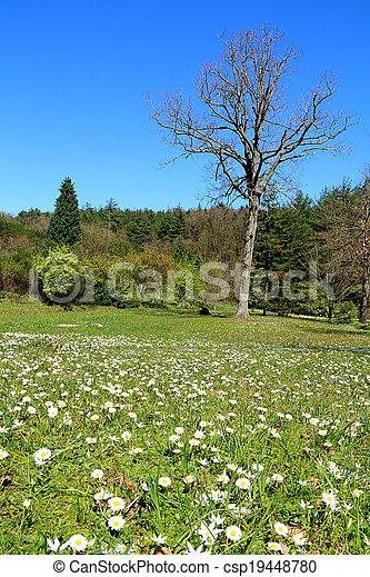 Pictures of 2014 Spring In Ataturk Arboretum Lanscape View ...
