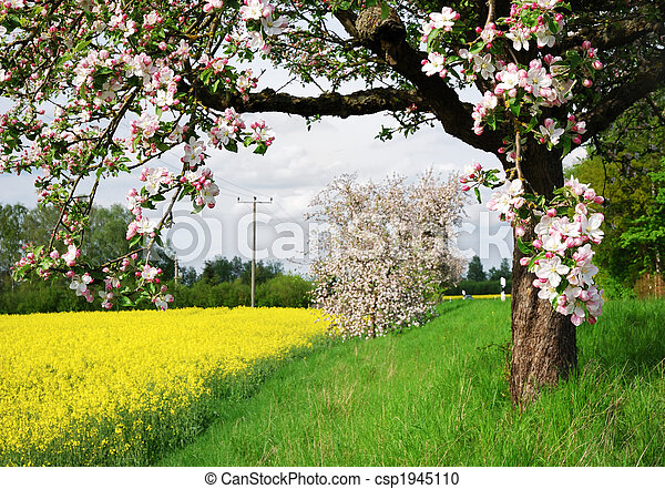 Flowering tree - csp1945110