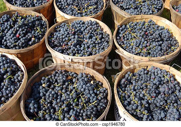 harvest time - csp1946780