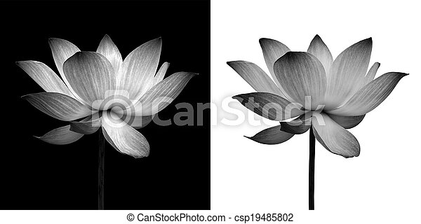 Abstract of Lotus - csp19485802