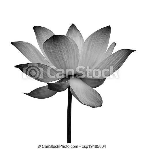 Abstract of Lotus - csp19485804