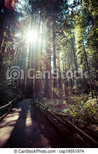 redwood national park in california, usa - csp19551974