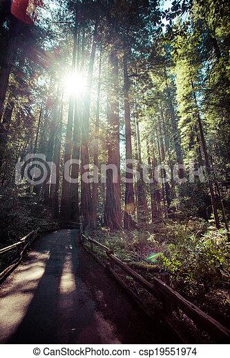 redwood national park in california, usa  - csp19551974