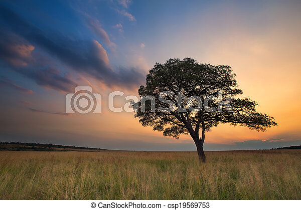 Lovely grasland sunset with tree and bright colours clouds - csp19569753