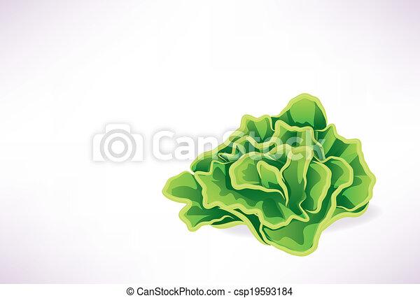 Lettuce Leaf Illustration