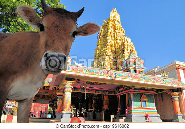 Sacred cow in front of Hindu temple, Sri Lanka - csp19616002