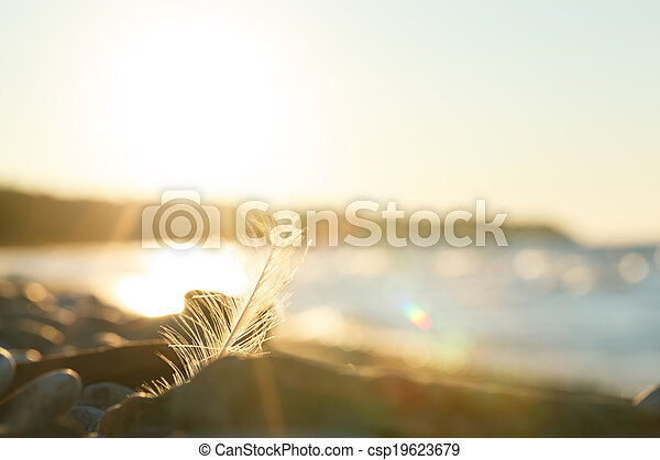 Nature scene at sunset - csp19623679