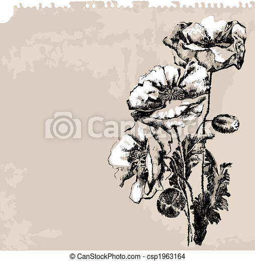Poppy Flowers On Grunge Background - csp1963164