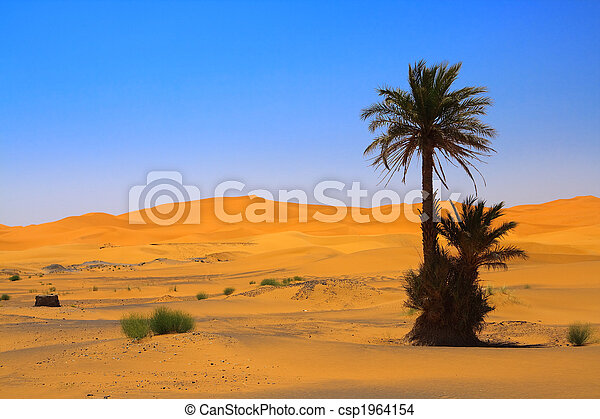palm tree on Sahara desert (Erg Chebbi, Morocco)  - csp1964154