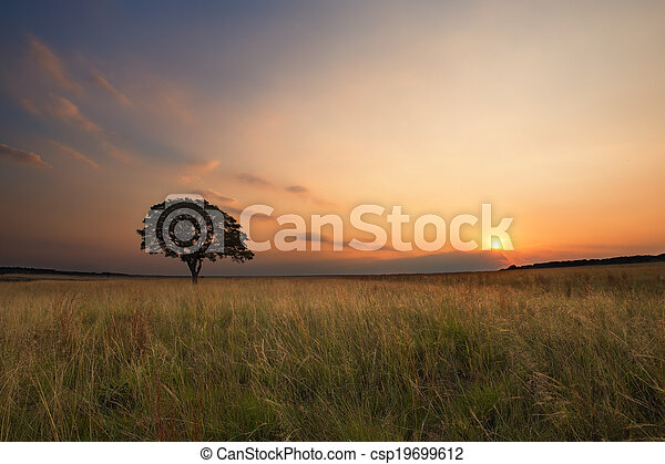Lovely grasland sunset with tree and bright colours clouds - csp19699612