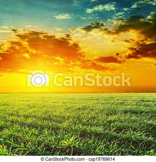 orange sunset over green grass field - csp19769614