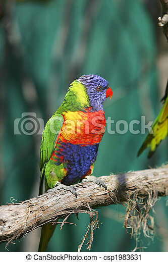 colorful red blue green bird