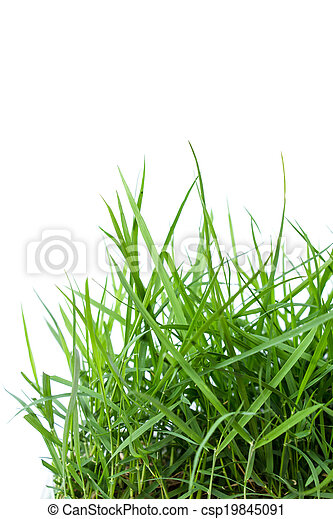 fresh green grass isolated on white background - csp19845091