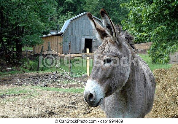 donkey in pasture - csp1994489